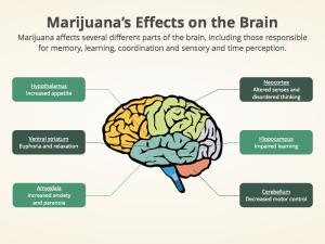 Marijuana's Effects on the Brain